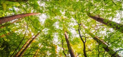 Lancement de l'animation territoriale forestière